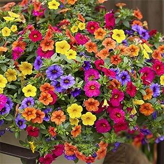 花の種 ペチュニア パステルカラー ミックス 約100粒