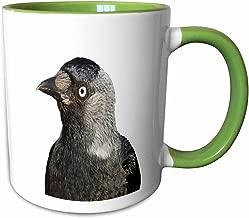 3dRose 243172_7 Jackdaw Corvus monedula Bird Portrait, Green Mug 312 جم
