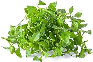 Watercress Garden Seeds - 0.25 Oz - Non-GMO, Heirloom, Vegetable Gardening Cress & Microgreens Seeds