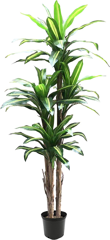 AMERIQUE Gorgeous Tropical Dracaena Ranking Spasm price TOP19 Artificial Plant Silk w Tree