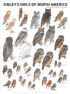 Picture Peddler Laminated Sibley's Owls of North America Great Horned Screech Barn Snowy 18x24