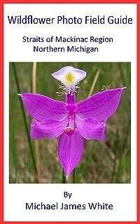 michigan wildflowers photos