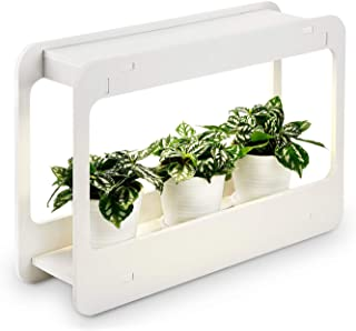 Best hydroponic grow box designs Reviews