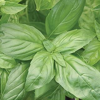 Burpee 60893A Organic Large Leaf Basil Seeds