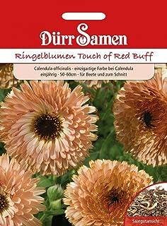 Dürr-Samen Ringelblume Touch of Red Buff