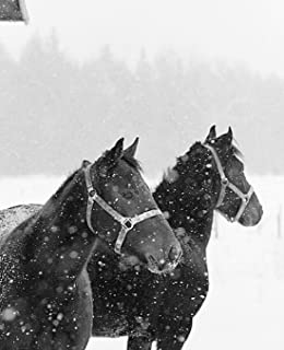 Horse Photo School Composition Book Equine Horses in Snowfall: Horse Photo Equine Covers Composition Books Notebooks (Note...