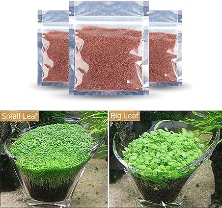 Etopfashion アクアリュム用品 水草シード 3つセット 水槽 ミニ種子 プレミアムシード 観賞用 水生植物 水槽飾り 最適な温度25度 増殖スピード速い 無農薬 栽培が簡単 3つセット