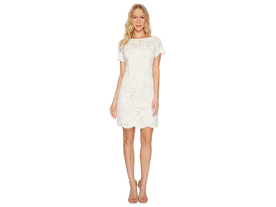 Vince Camuto Lace Shift Dress with Scallop Details At Hem (Ivory) Women