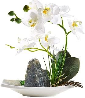 IMIEE Artificial Phaleanopsis Arrangement with Vase Decorative Orchid Flower Bonsai (White)