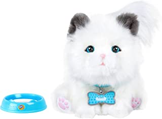 Best kitten little live pets Reviews