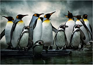 PHOTO NATURE EMPEROR PENGUIN BIRDS FRAMED PRINT F12X3283