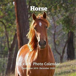 Horses 8.5 X 8.5 Calendar September 2019 -December 2020: Monthly Calendar with U.S./UK/ Canadian/Christian/Jewish/Muslim H...