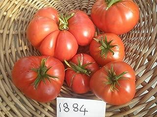 AGROBITS Tomatoheirloom 1884 QuantitA   recommander ghly pour goA  t