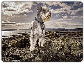 """CELYCASY Schnauzer Dogs on Coast Durable Machine-Washable Indoor/Outdoor Door Mat 23.6""""(l) X 15.7""""(w) inch"""