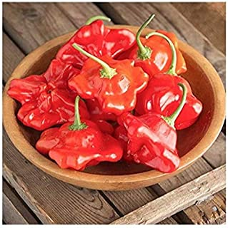 David's Garden Seeds Pepper Hot Mad Hatter 7234 (Red) 25 Non-GMO, Hybrid Seeds
