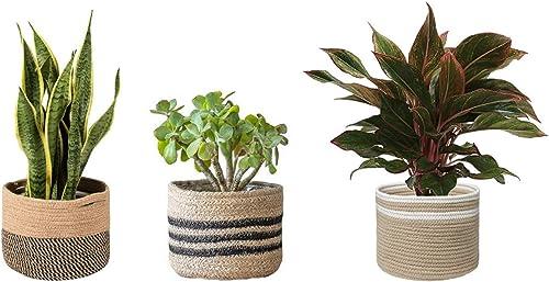 Party Stuff Cotton Basket Planter, Beige, 6x6 inch, 3 Pieces