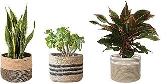 PartyStuff Jute Planter Basket, Indoor Planter, Balcony, Office Desk (6x6 inch, Set of 3 designs)