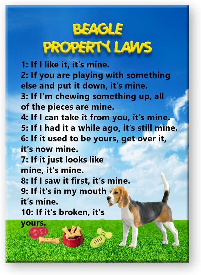 Beagle Property Laws Fridge Magnet Funny
