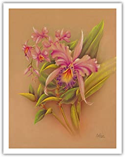 Pacifica Island Art Pink Cattleya Orchid Flower - Hale Pua Studio Hawaii - Vintage Hawaiian Airbrush Art by Frank Odac.1940s - Fine Art Print - 11in x 14in