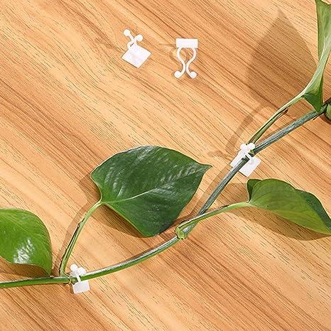 Asodomo 100 clips de pared para escalada de plantas, fijación de pared autoadhesiva, gancho adhesivo para plantas de vid de tracción, fijación de ...