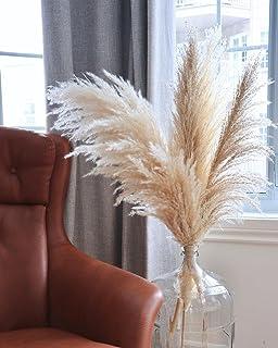 DiaRom 50//100 St/ück Pampasgras Getrocknet Deko Getrocknete Blumen Vasen Bouquet Boho Dekoration Zweige f/ür Inneneinrichtung Schlafzimmer Wohnzimmer Balkon Badezimmer Zimmer Tischdeko Hochzeit