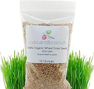 Organic Wheat Grass Seeds, Cat Grass Seeds, 16 Ounces- 100% Organic Non GMO – Hard..