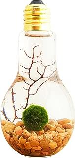 Bliss Gardens Marimo Moss Ball Light Bulb Water Terrarium/River Rocks/Great Gift/New Pet/Aquatic Plant