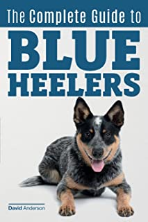Best australian cattle dog calendar 2018 Reviews