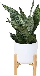 Best live potted plants Reviews