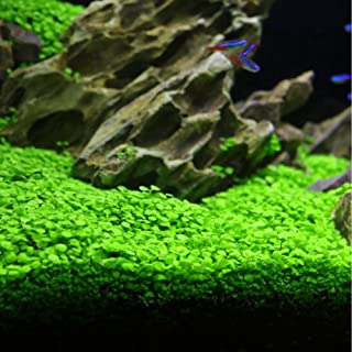niceeshop Aquarium Plants Seeds Aquatic Glossostigma Hemianthus Callitrichoides Water Grass Seeds for Fish Tank Rock Lawn Garden Decor -Large Leaf