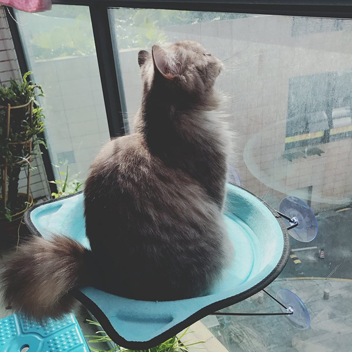 Cat Window Perch, DOTPET Metal Cat Hammock Finestra montata fino a 26lbs Finestra Mounted Cat Bed *Cat Sunny Seat 4 Suction Cup Mini Kitty Climbing Tower Godere Comfortable Sunbag for Winter (Blue)