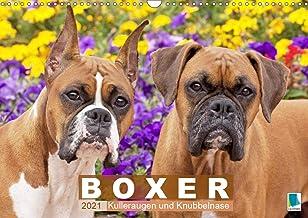 Boxer: Kulleraugen und Knubbelnase (Wandkalender 2021 DIN A3 quer)
