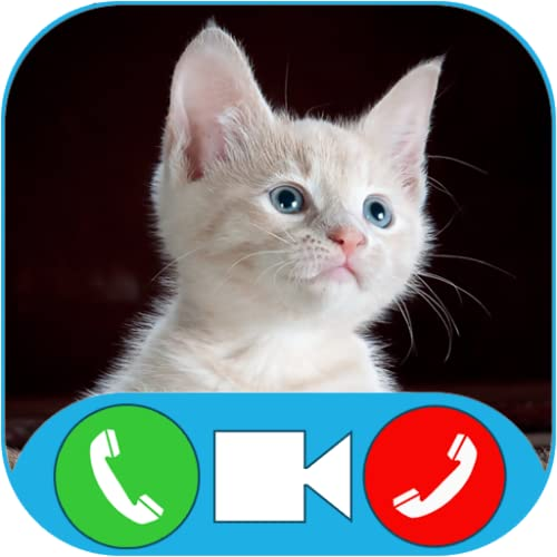 Cat Video Call & Chat Simulator Prank