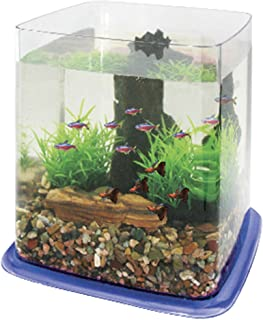 ICA PT073D Bettera Betta Battle Paradise, Azul