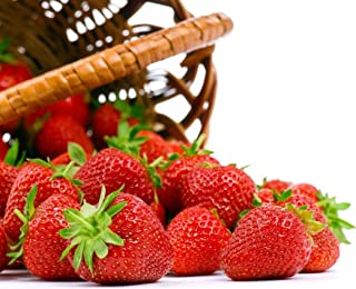 Seascape Everbearing Strawberry 10 Bare Root Plants - BEST FLAVOR