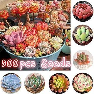 YESZ Sementes de Plantas, Sementes de Flores, 500Pcs Suculentas Sementes Jardim Varanda Perene Herbal Fleshier Bonsai Plan...