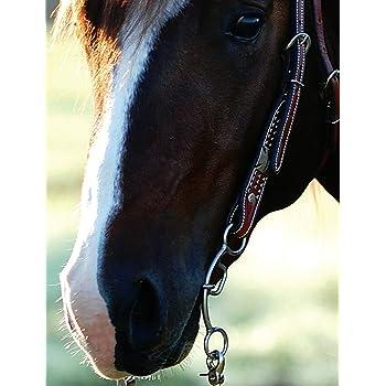 Double Gag Classic Equine Goostree Bit