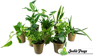 Clean AIR Houseplant Multi-Pack Gift Collection with Eco-Friendly Rice Hull Pots (3 Plants)
