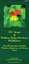 Best images of mountains and flowers Reviews