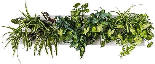 Hoh. Trio Smart por ortisgreen, tres vertical Garden cajas en color blanco (plástico ABS) y apoyo para tres Hoh. En Acero Inoxidable, sustrato natural y instrucciones incluidas