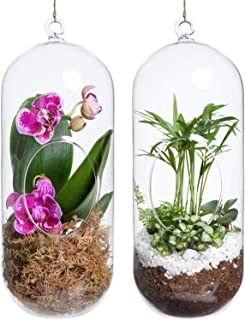 Mkono 2 Pack Glass Hanging Planter Terrarium Small Orchid Flower Vase Hanger Air Plant Holder Home Decoration for Succulent Moss Air Fern Ornaments, Capsule (Plants NOT Included)