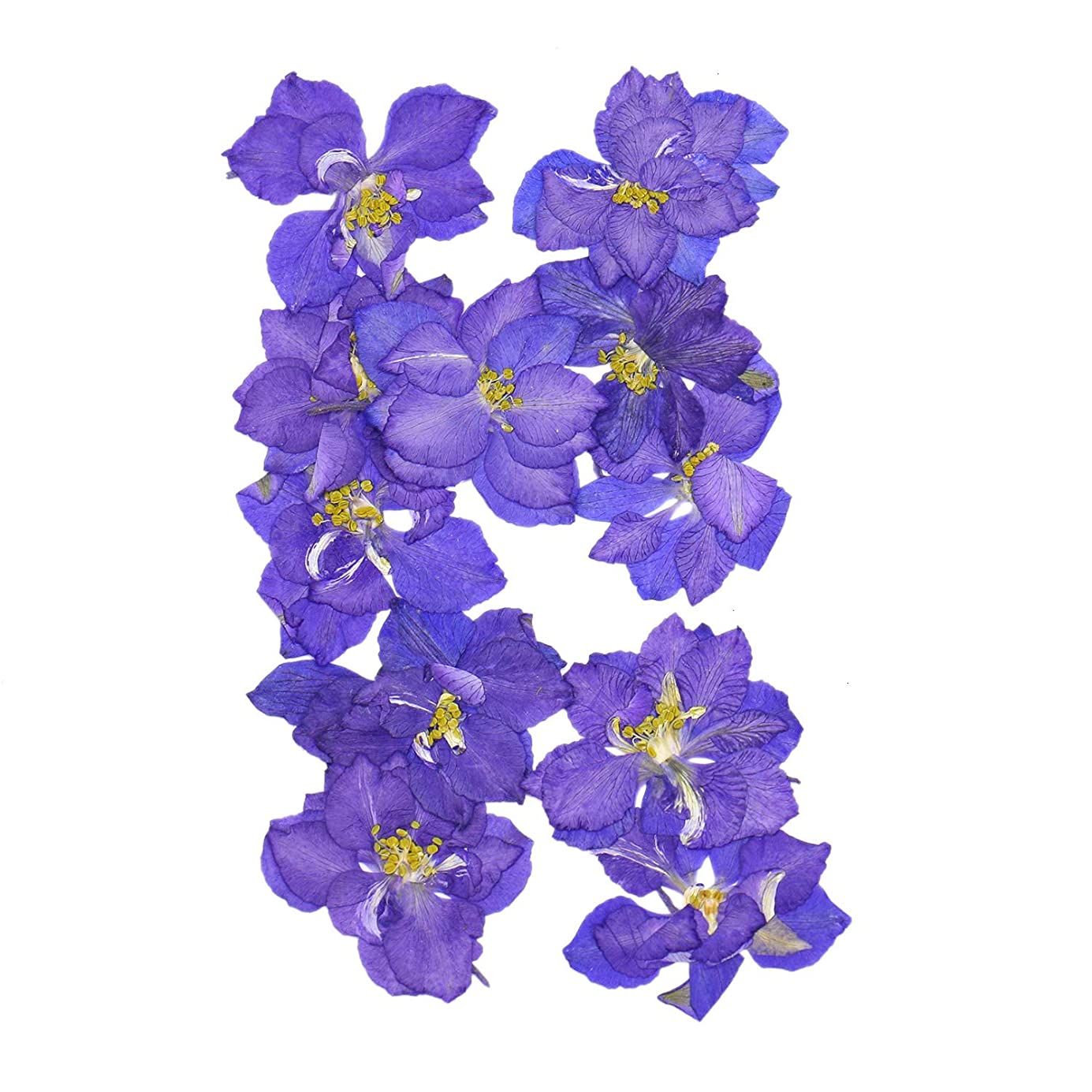 Monrocco 20Pcs Real Larkspur Dried Flowers Pressed Flowers DIY Preserved Flower Decorations nmceoo0797
