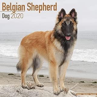 Belgian Shepherd Dog Calendar 2020 - Dog Breed Calendar - Wall Calendar 2019-2020