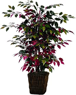 4' Capensia Bush in Square Willow Container