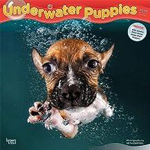 Underwater Puppies 2020 Square Wall Calendar