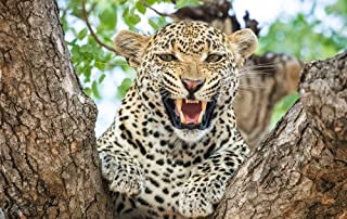 ElloStorka Cheetah Roar/Animal Poster Print (Size:16x24 inch)