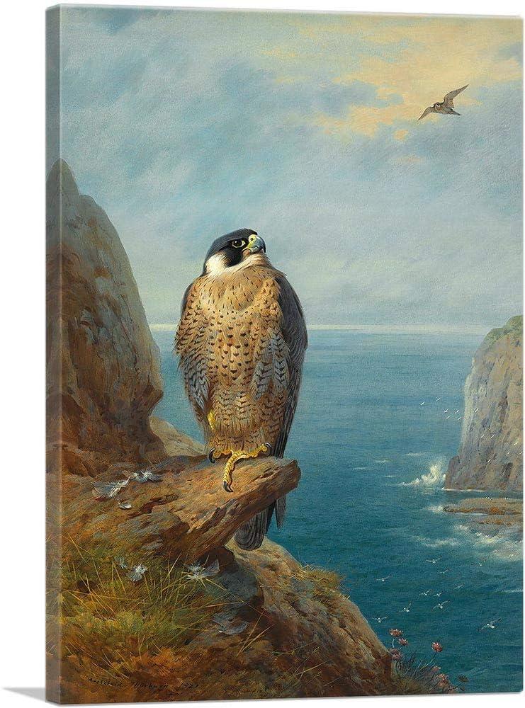 ARTCANVAS 中古 A Peregrine Falcon Perched On Canvas Sea a 1921 Cliff 買収