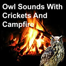 Owl Sounds with Crickets and Campfire