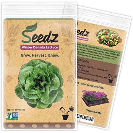 550 x Winter Mix Baby Leaf Mixed Lettuce Seeds Cut /& Come Again Salad Leaf
