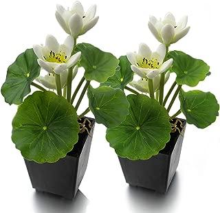 Best lotus flower arrangement Reviews